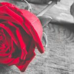 Connaissez-vous la rose éternelle ?