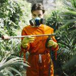 Maladie de la rouille et la maladie des tâches noires : comment les traiter ?